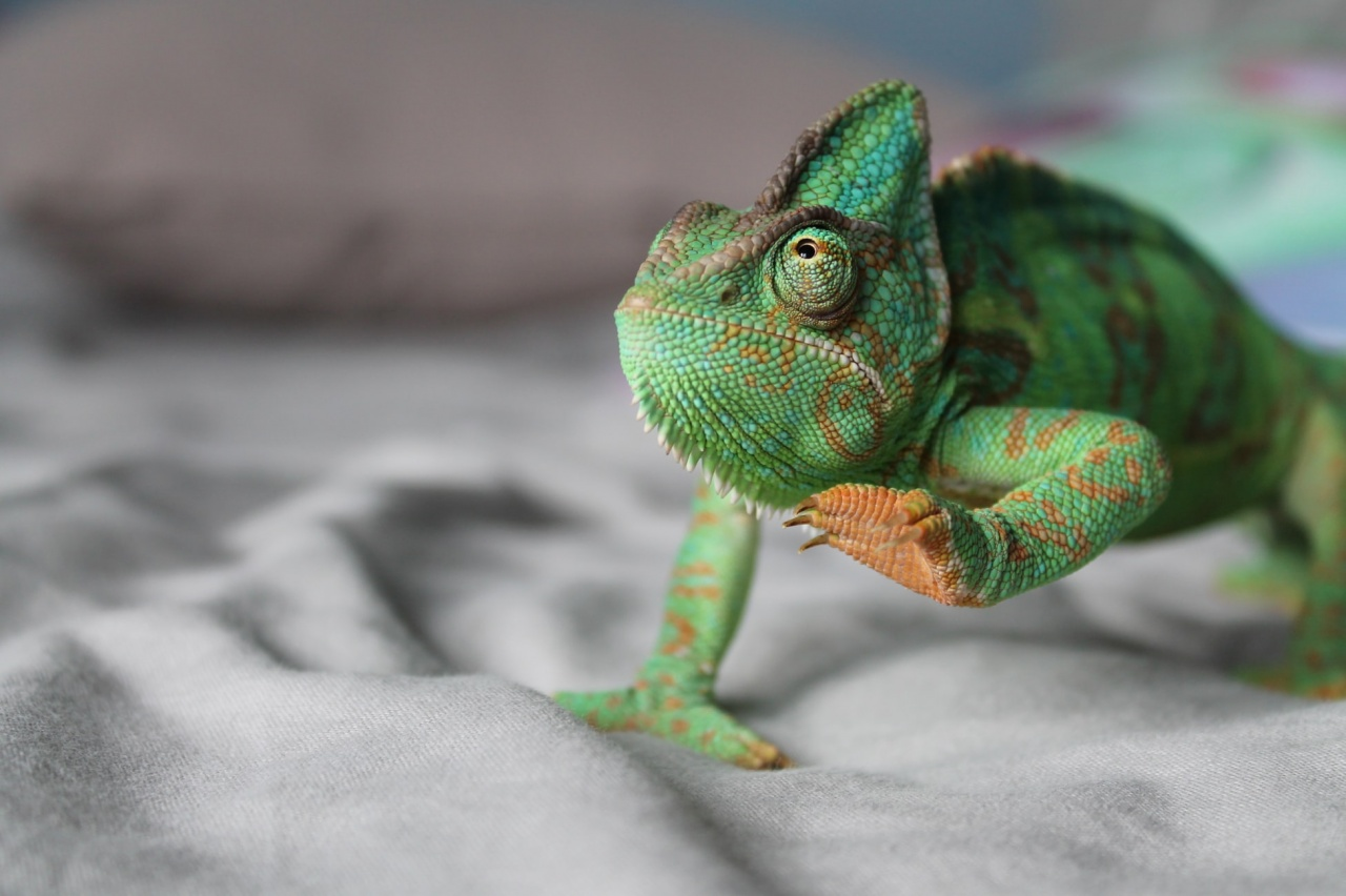 BEWARE OF BECOMING A CRISIS CHAMELEON
